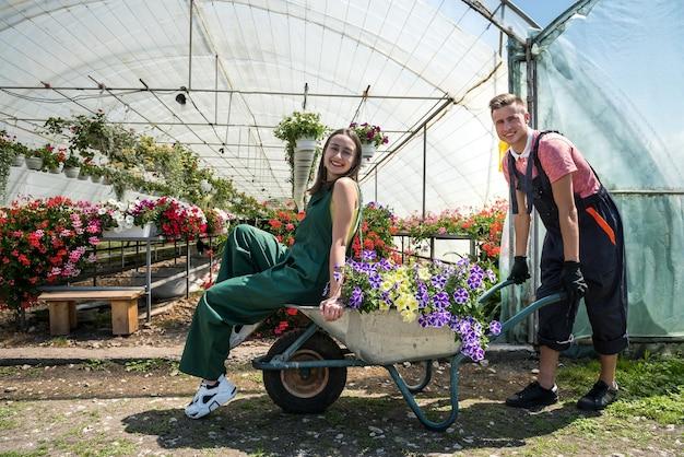 Jovem casal feliz se divertindo em uma estufa enquanto o homem monta sua esposa em um carrinho de mão depois de comprar uma joint-venture