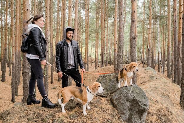Jovem casal heterossexual feliz em trajes casuais segurando coleiras de dois cachorrinhos beagle fofos enquanto relaxam juntos na floresta.
