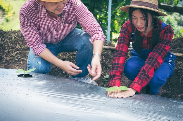 Jovem casal plantando mudas vegetais no jardim