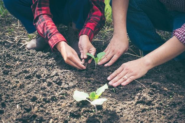 Jovem casal plantando vegetais no jardim