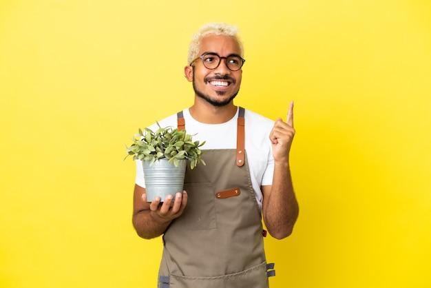 Jovem colombiano segurando uma planta isolada em um fundo amarelo apontando uma ótima ideia