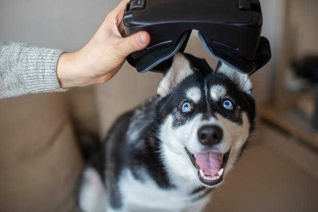 Jovem com óculos de realidade virtual e cachorro husky joga em casa