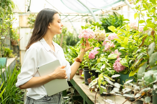 Jovem e atraente jardineira de negócios com tablet cheira flores de hortênsia em estufa