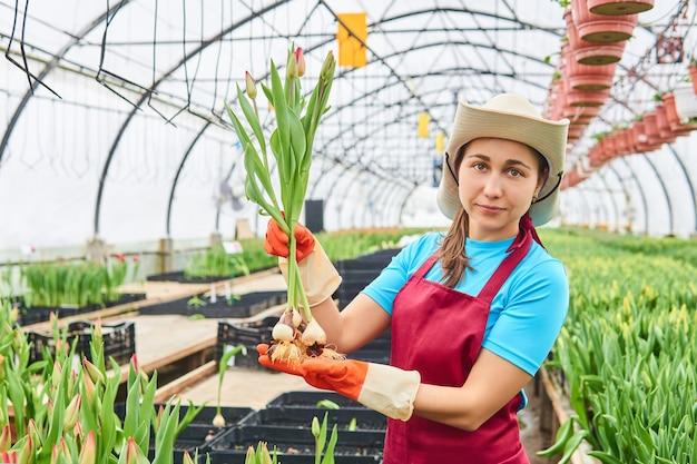 Jovem e atraente trabalhadora colhendo tulipas em uma estufa