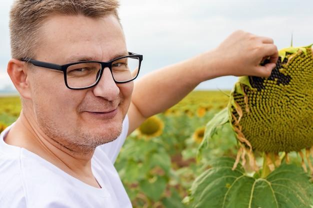 Jovem em campo com girassóis arranca sementes de girassol da flor, um agrônomo verifica se as sementes de girassol estão maduras