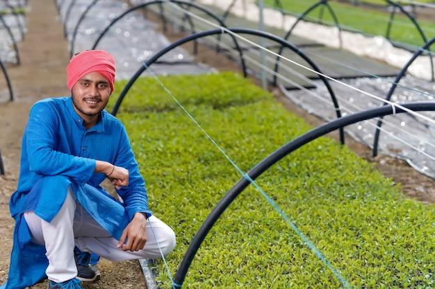 Jovem fazendeiro indiano em estufa ou casa poli