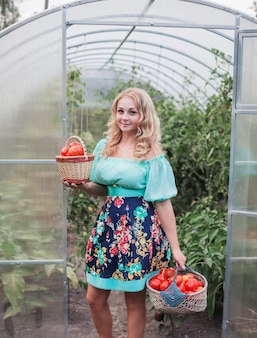 Jovem feliz com colheita de tomate em estufa