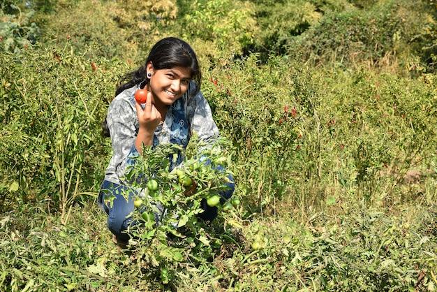 Jovem feliz escolhendo ou examinando tomates frescos em fazenda orgânica ou campo