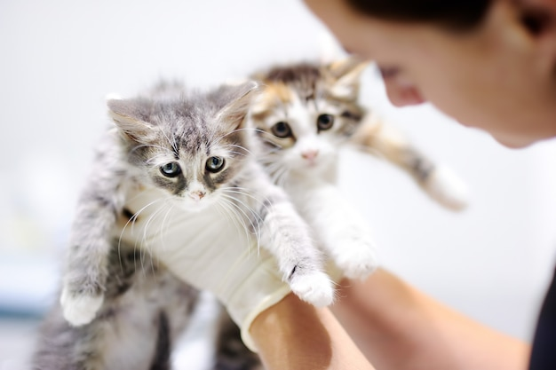 Jovem, femininas, veterinário, doutor, olhar, cute, gatinho