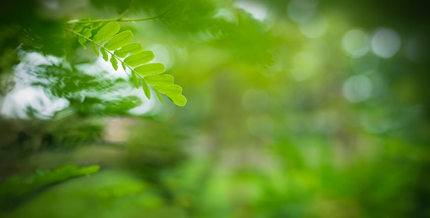 Jovem folha verde na natureza turva