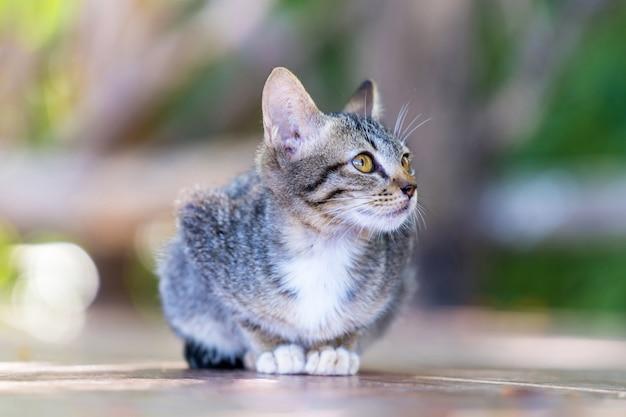 Jovem gato cinza rua