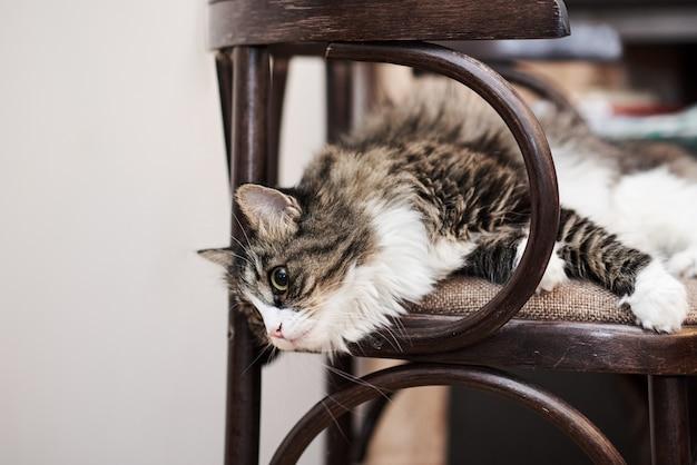 Jovem gato doméstico bonito em casa, closeup