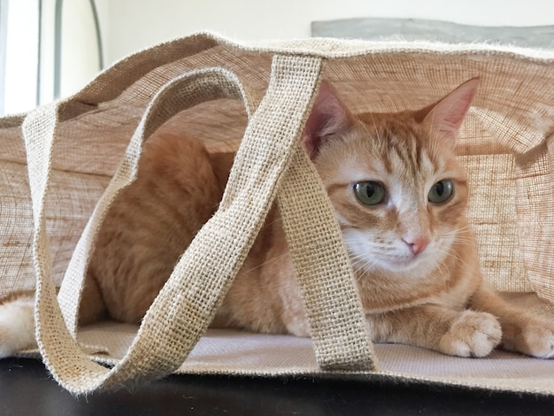 Jovem gato escondido em uma lona de bolsa de tecido marrom