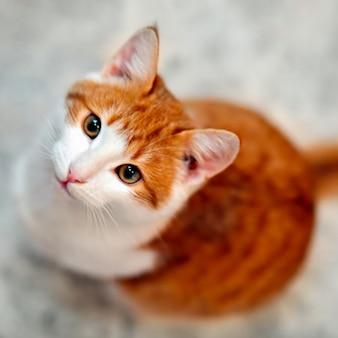 Jovem gato faminto