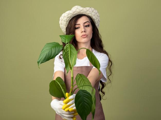 Jovem jardineira pensativa de uniforme, usando luvas e chapéu de jardinagem, segurando e olhando para uma planta isolada na parede verde oliva