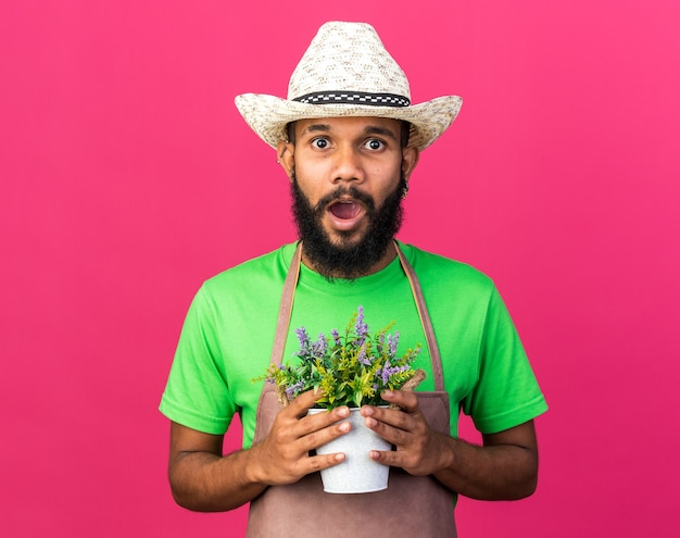 Jovem jardineiro afro-americano surpreso com um chapéu de jardinagem segurando uma flor em um vaso de flores isolado na parede rosa