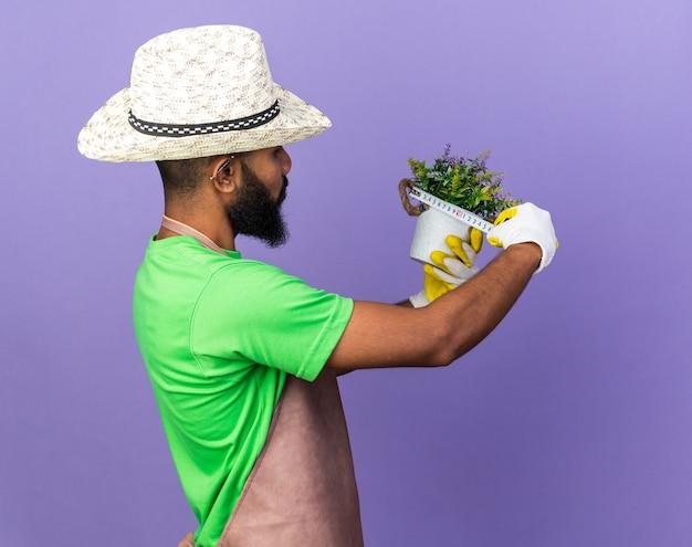 Jovem jardineiro afro-americano usando um chapéu de jardinagem medindo uma flor em um vaso de flores com uma fita métrica isolada na parede azul