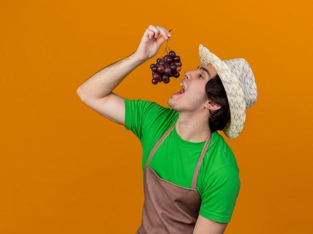 Jovem jardineiro de avental e chapéu mostrando cacho de uva indo provar em pé sobre fundo laranja