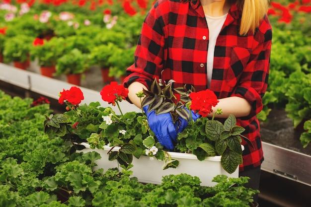 Jovem jardineiro feminino em luvas trabalhando em estufa