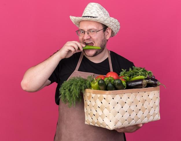 Jovem jardineiro satisfeito com um chapéu de jardinagem segurando uma cesta de vegetais e experimentando pimenta isolada na parede rosa