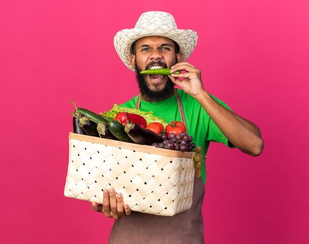 Jovem jardineiro zangado, cara afro-americana, usando um chapéu de jardinagem segurando uma cesta de vegetais e mordendo pimenta