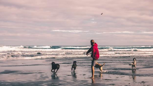 Jovem jogando para jogar um pedaço de pau para seus cães na praia