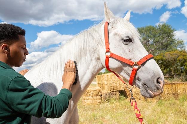 Jovem macho afro-americano usando o pincel para cuidar de pêlos de cavalo branco no rancho dia nublado