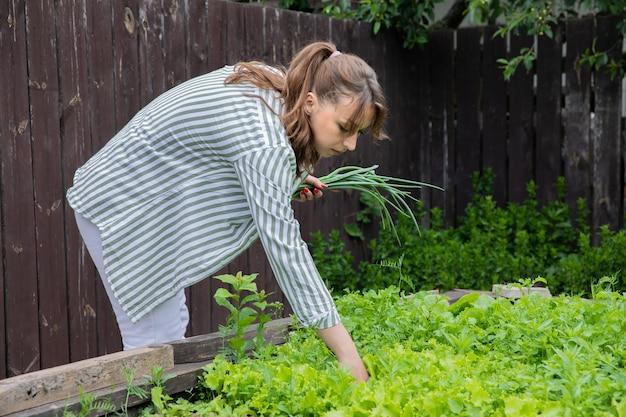 Jovem morena atraente e sexy colhendo folhas de alface orgânica do canteiro