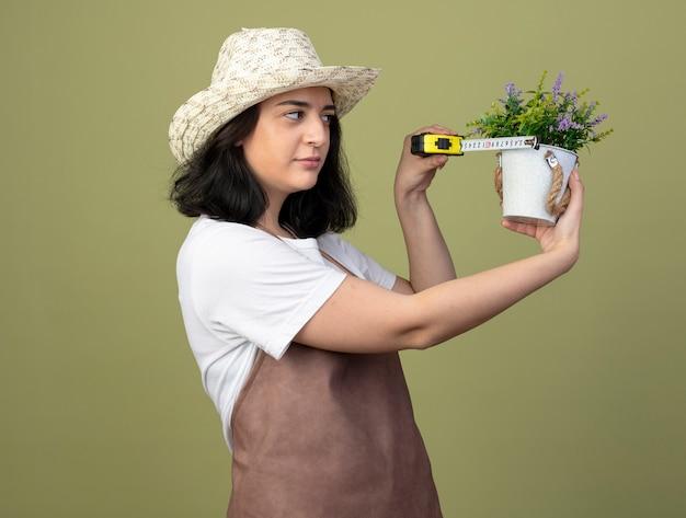 Jovem morena confiante jardineira feminina de uniforme, usando chapéu de jardinagem, medindo vaso de flores com fita métrica isolada na parede verde oliva