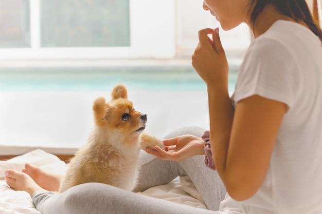 Jovem mulher asiática treinando seu cachorro da pomerânia em casa