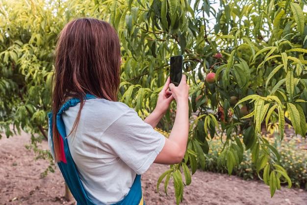 Jovem mulher branca tirando uma foto de pêssegos em árvores