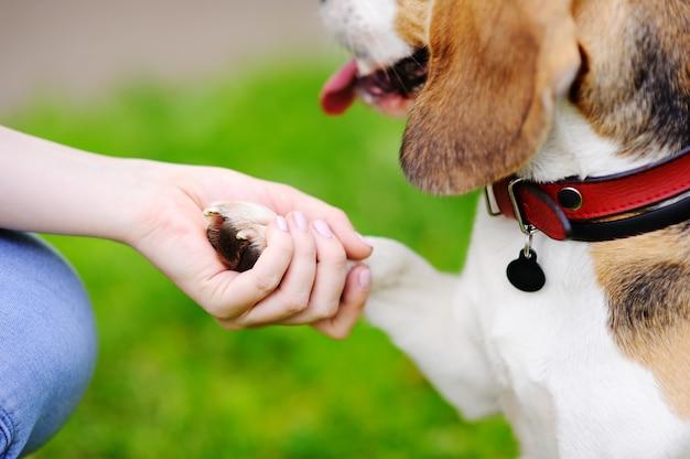 Jovem mulher com cachorro beagle no parque de verão.