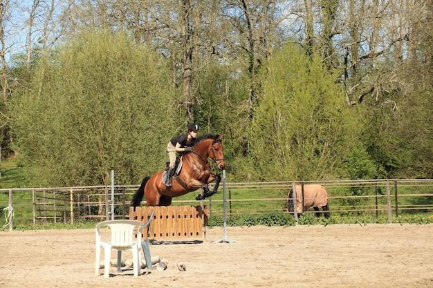 Jovem mulher com um cavalo castanho saltar um obstáculo