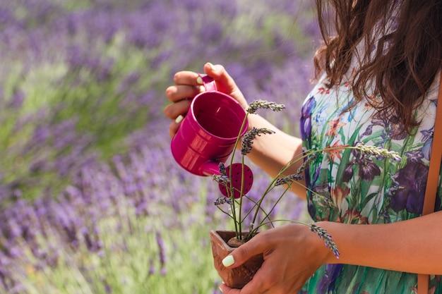 Jovem mulher em um vestido fica no meio de um campo de lavanda regando uma planta em vaso de rega