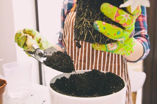Jovem mulher está transplantando uma planta para um novo vaso em casa