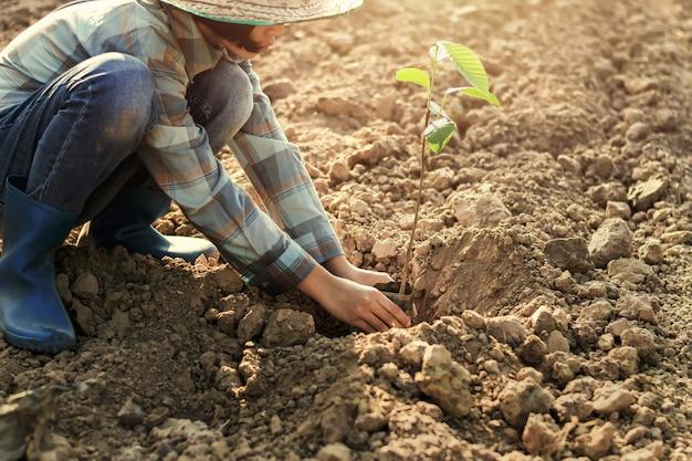 Jovem mulher que planta a árvore no jardim. conceito mundo verde