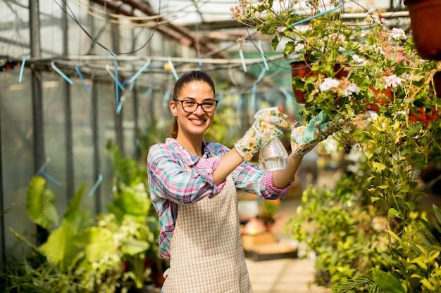 Jovem mulher que trabalha com flores da primavera na estufa