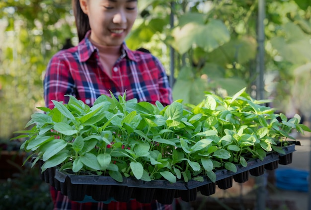 Jovem mulher que veste a luva plástica que mantém a planta nova na casa verde pronta para plantar.