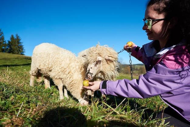 Jovem mulher sorridente em óculos de sol dando maçãs para ovelhas brancas pastando em um prado verdejante.