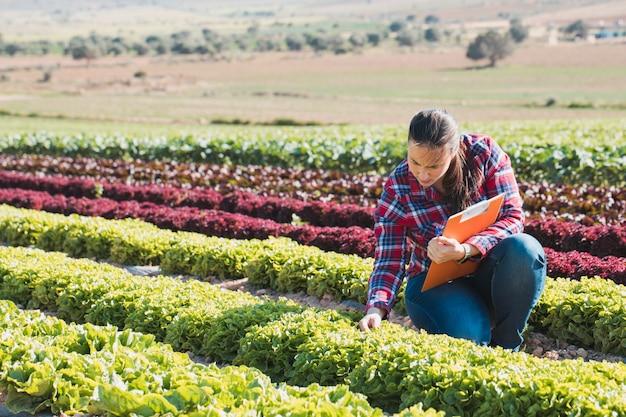 Jovem mulher técnica trabalhando em um campo de alfaces com uma pasta