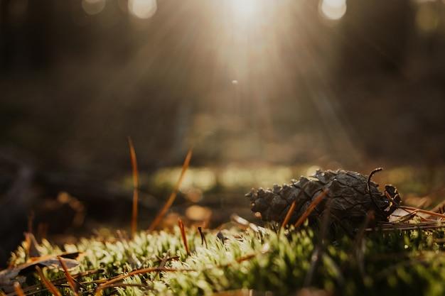 Jovem musgo coberto de tronco de árvore sob a luz do sol