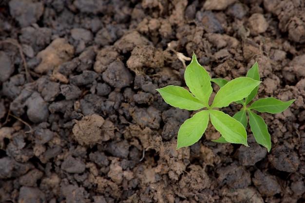 Jovem planta crescendo na natureza