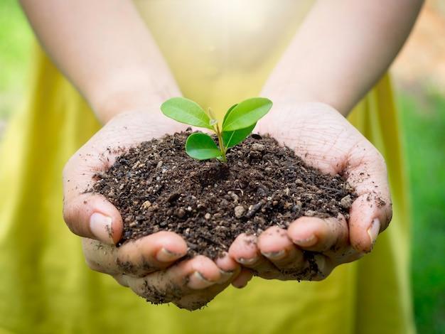 Jovem planta verde na mão. feche a mão feminina segurando a planta do broto em solo orgânico em desfocar o fundo verde com a luz solar. conceito de ecologia, dia da terra, agricultura e jardinagem.