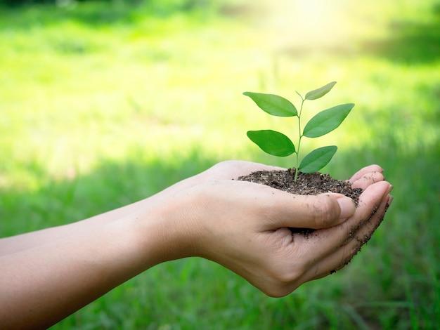 Jovem planta verde na mão. feche a mão feminina segurando a planta do broto em solo orgânico em desfocar o fundo verde com espaço de cópia, vista lateral. conceito de ecologia, dia da terra, agricultura e jardinagem.