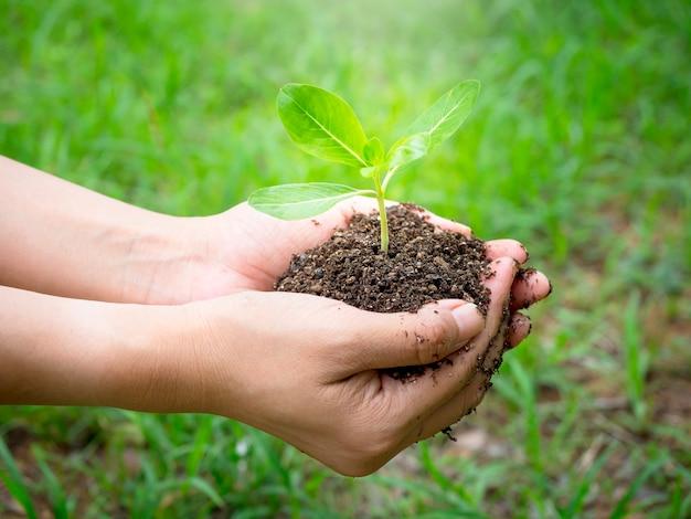 Jovem planta verde na mão. feche a mão feminina segurando a planta do broto em solo orgânico em desfocar o fundo verde com luz solar, vista lateral. conceito de ecologia, dia da terra, agricultura e jardinagem.