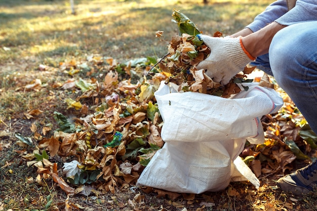 Jovem rapaz recolhe folhas caídas no outono