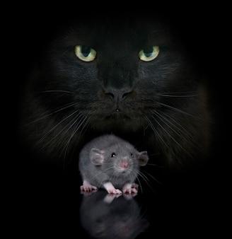 Jovem rato e gato