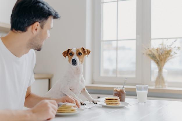 Jovem se afasta da câmera, olha atentamente para cão de raça, almoçar juntos, comer deliciosas panquecas deliciosas na mesa da cozinha, usar garfos, posar na espaçosa sala de luz com janela grande