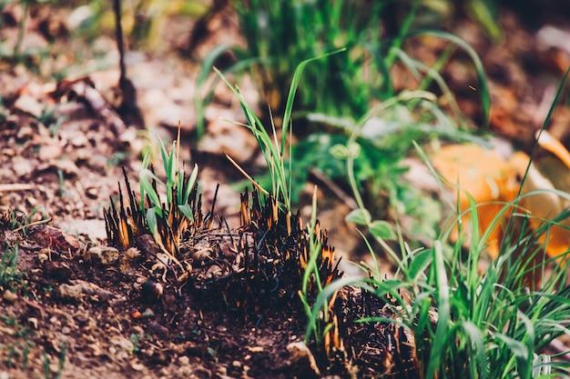 Jovem, verde, rebento, plantar, queimadura, árvores