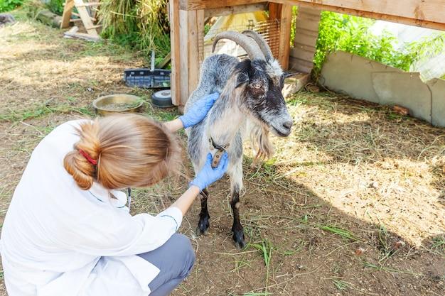 Jovem veterinária com estetoscópio segurando e examinando cabra no rancho